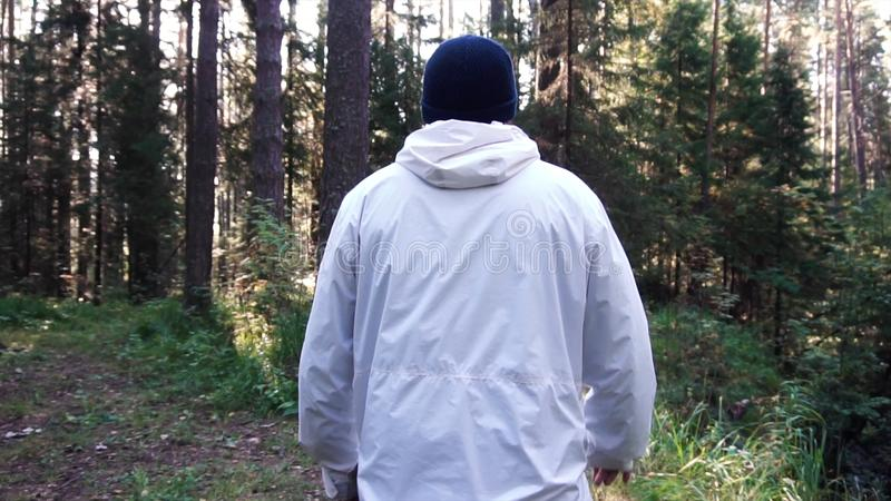 Young man on camping trip. Footage. Concept of freedom and nature. View of man from back walking in woods along path on stock images