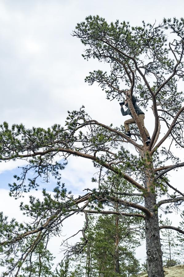 A young man climbed to the top of a tall pine and stared intently through binoculars, seeing something interesting, against a stock photo