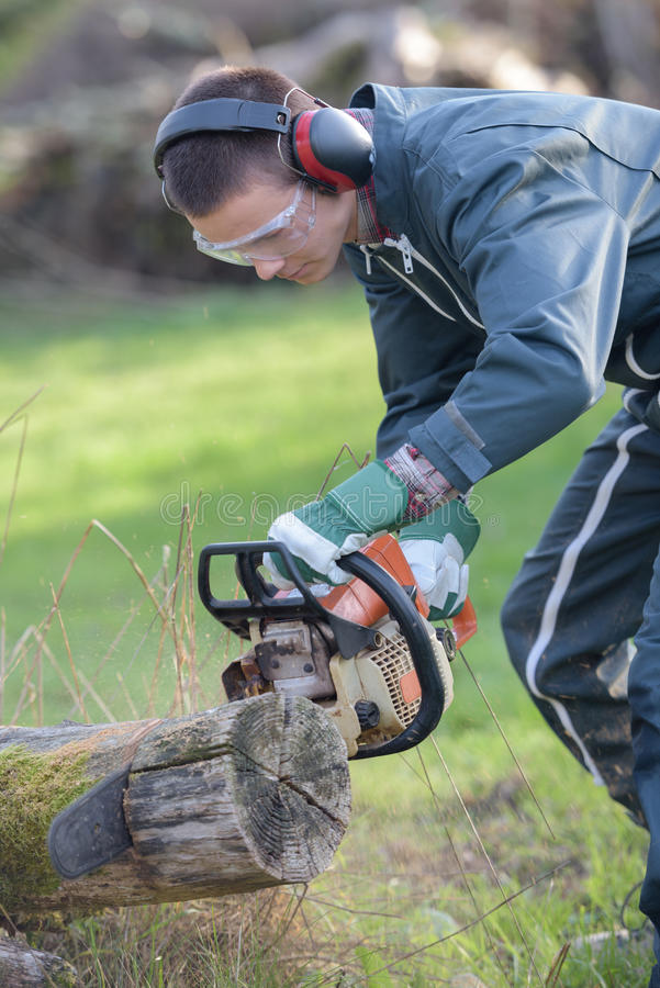 Young man cutting trees using chainsaw royalty free stock photography