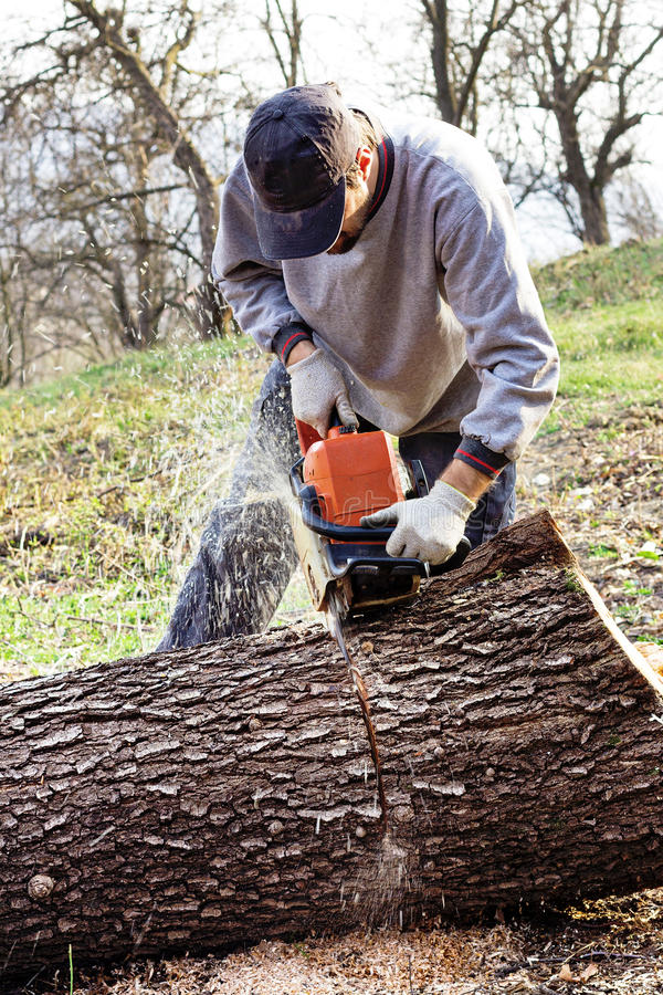 Young man cutting trees using an electrical chainsaw. In the countryside royalty free stock photography