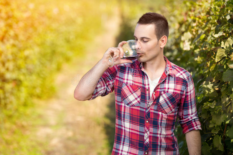Young man drinking wine in vineyard stock image