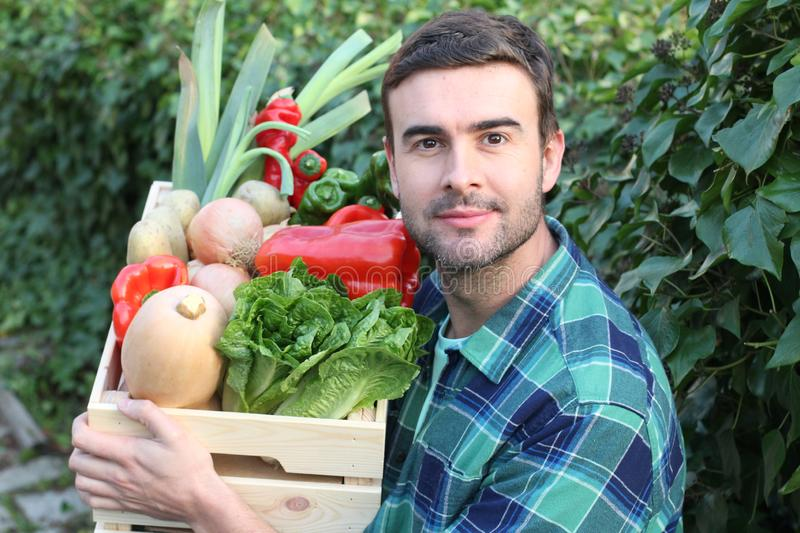 Young man harvesting his vegetable garden stock photography