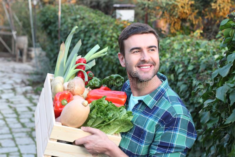 Young man harvesting his vegetable garden stock image