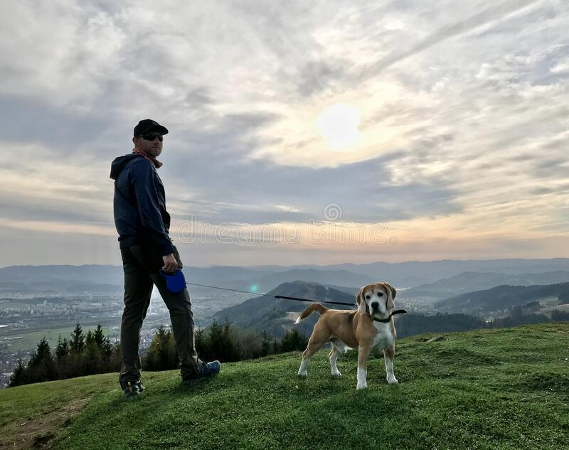 Young Man have a mountain dog walking with his beagle dog stock photos