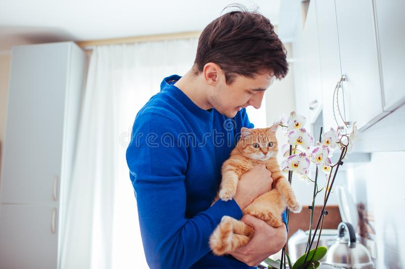 Young man holding a cat near the orchid at home.  stock photography