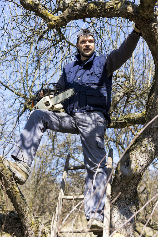 Young man holding a chainsaw trimming the tree. In the orchard stock images