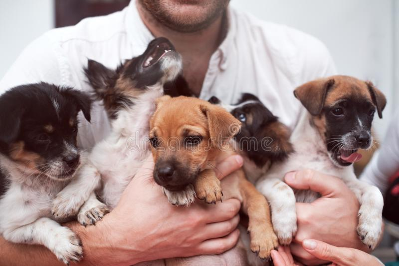 Young man holding 5 puppies in his hands. Cute gog family together. Rescue animal concept royalty free stock photos