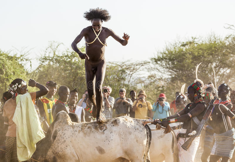 Young man jumps of the bulls. Turmi, Omo Valley, Ethiopia. stock photos