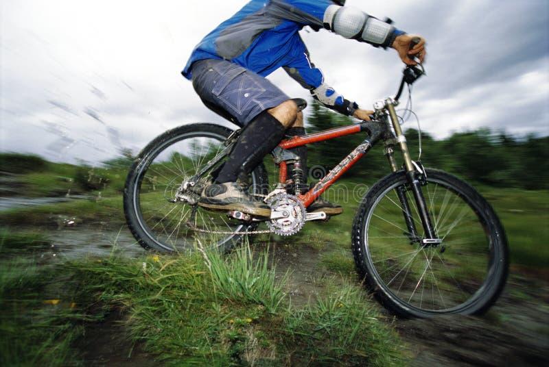Young man mountain biking royalty free stock image