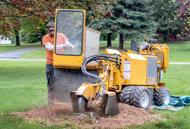 Man operates a stump grinder in a yard stock images