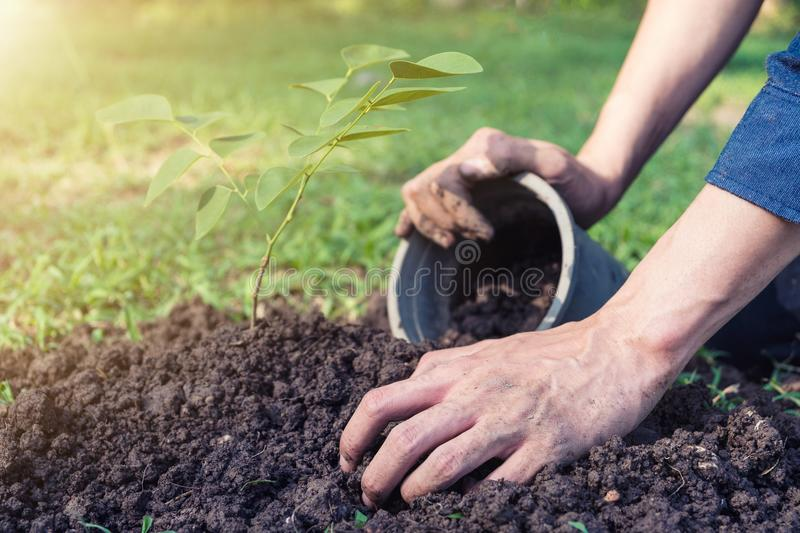 The young man is planting tree to preserve environment stock photo