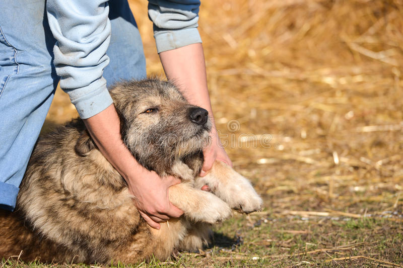 Young man playing with his dog. Goofing, petting and cuddling on the lawn stock photo