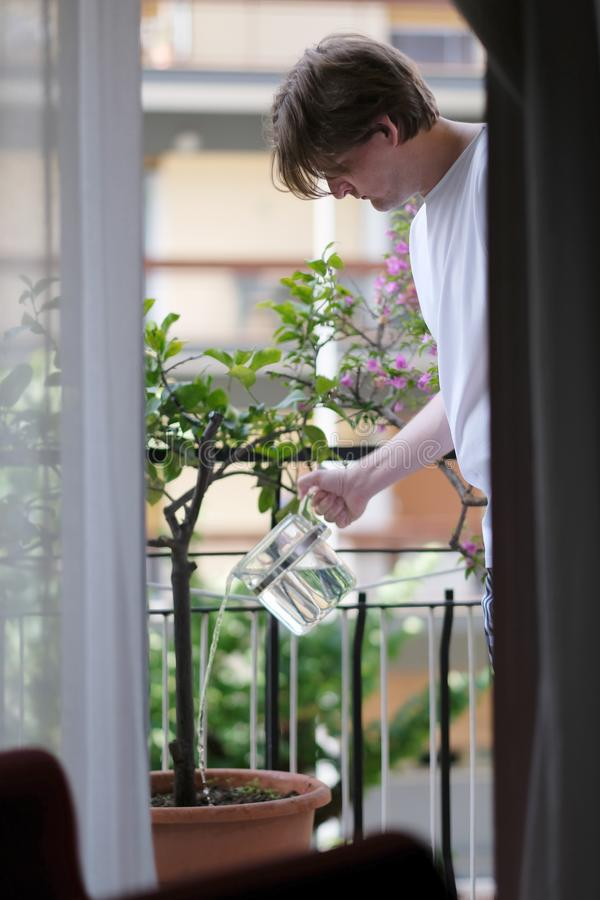 A young man pours decorative trees stock photography