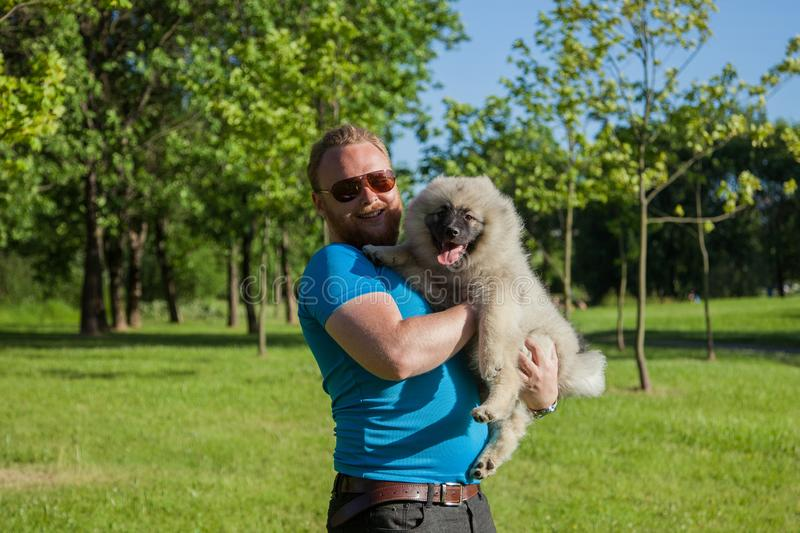 Young man with a red beard holds a Keeshond. / Wolfspitz puppy in the park royalty free stock images