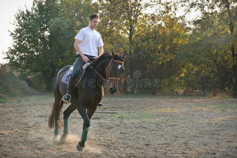 Download Young man riding  Horse stock photo. Image of dressage - 27313564