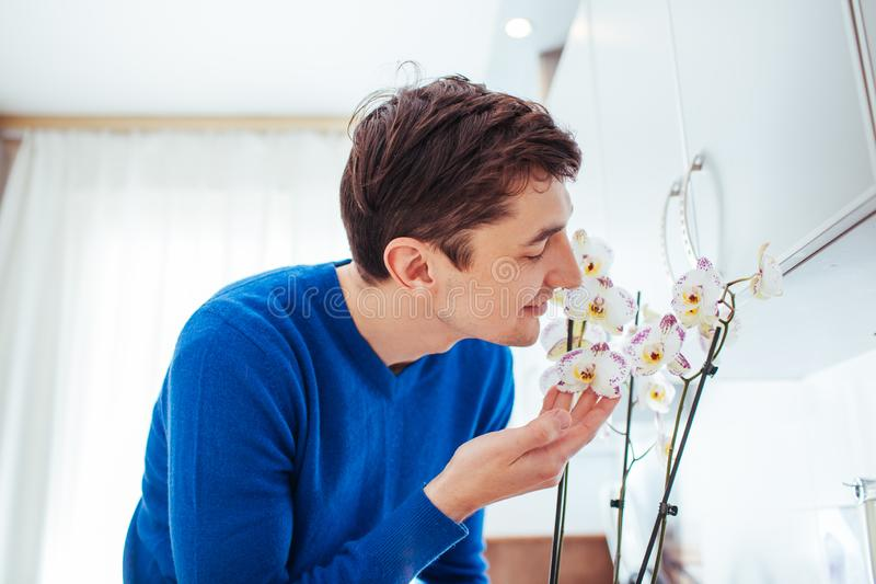 Young man sniffing orchid in kitchen at home. Young man sniffing orchid at home royalty free stock photos