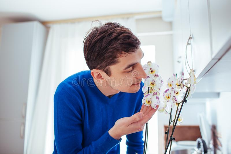 Young man sniffing orchid in kitchen at home.  royalty free stock photography
