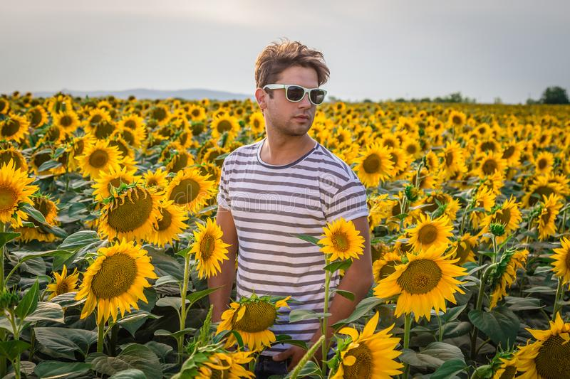 Download Young Man In Sunflower Field Stock Photo
