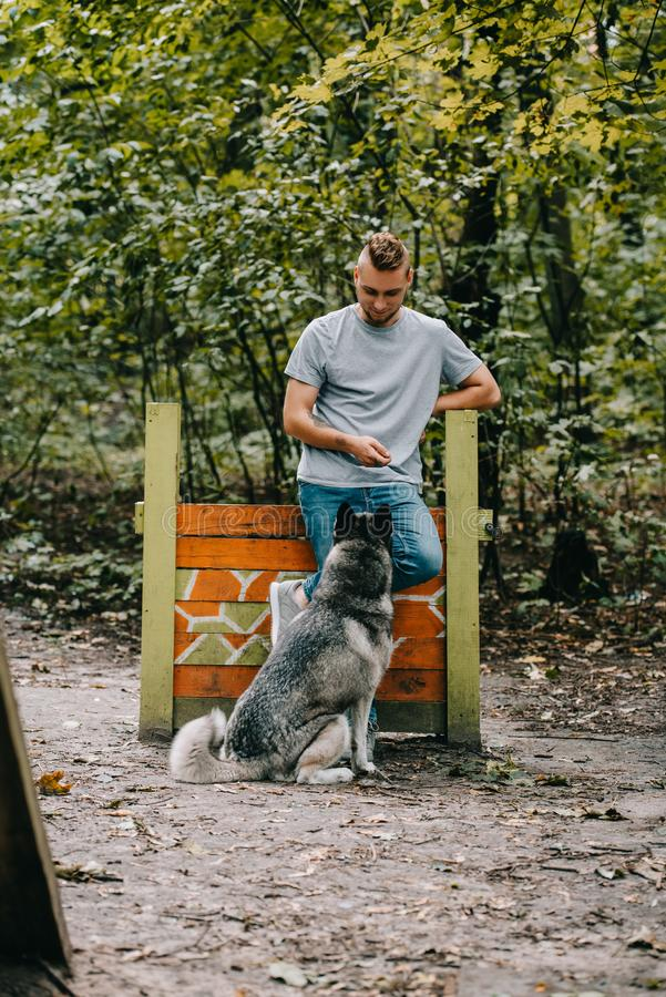 Young man training with obedient husky dog on jumping. Obstacle stock image