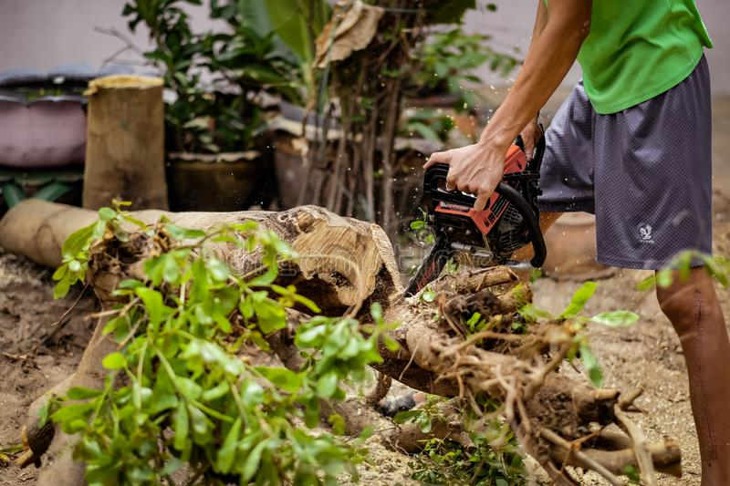 Young man uses electric saw to cut trees royalty free stock images