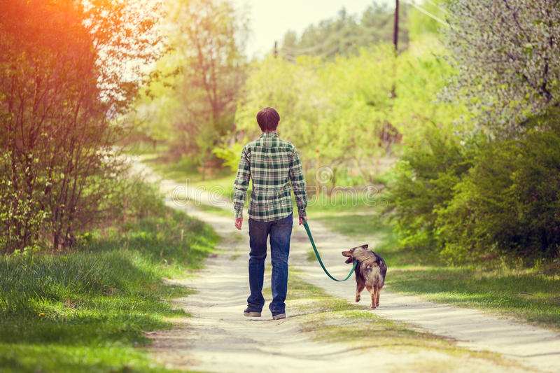 Young man walking with dog stock photos