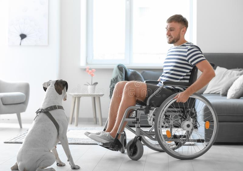 Young man in wheelchair with service dog at home stock photos