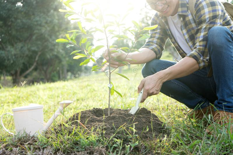 Young man and woman plant a tree stock image