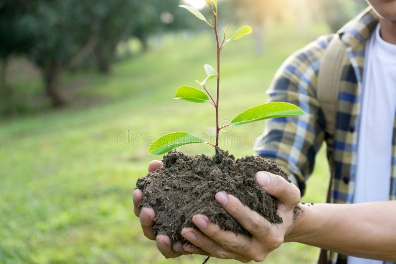 young man and woman plant a tree royalty free stock photos