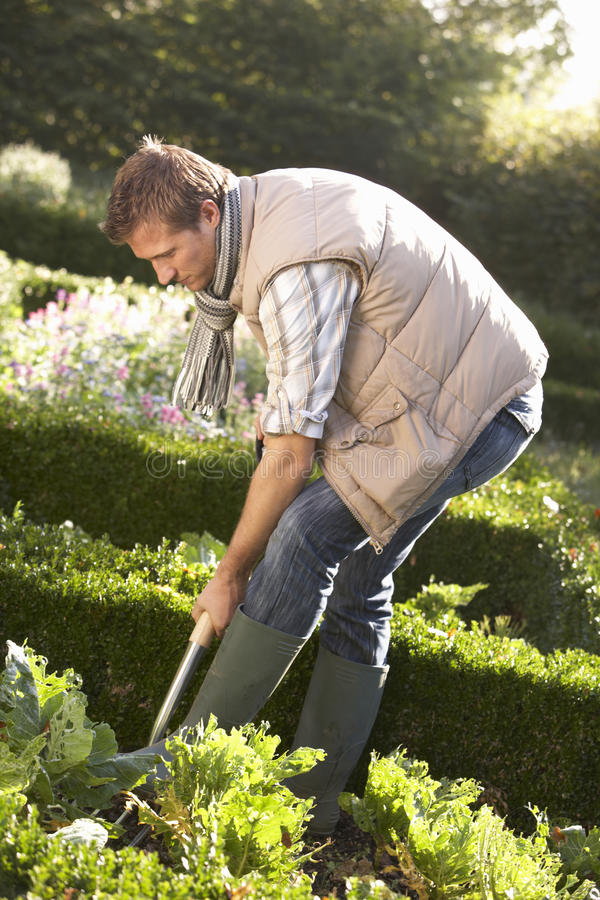 Download Young Man Working In Garden Stock Photo - Image: 17486214