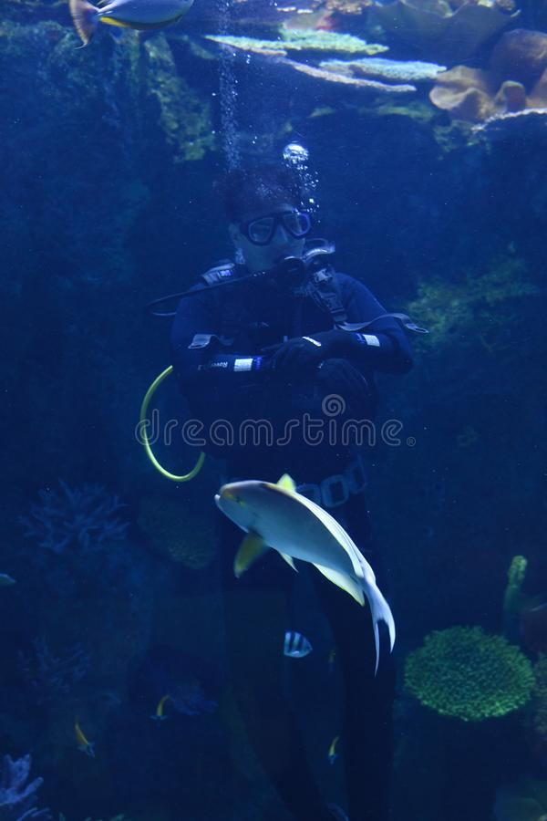 Young men in aquarium feeding food to bunch of fishes in ocean world bangkok stock photography