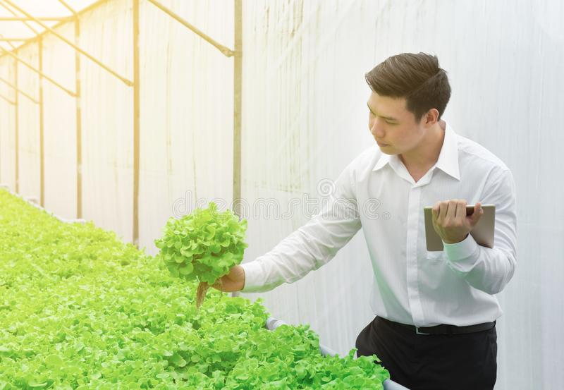 Young men Asian scientist check the quality control of the Agriculture food,young business entrepreneur product new generation. Young man Asian scientist check royalty free stock images