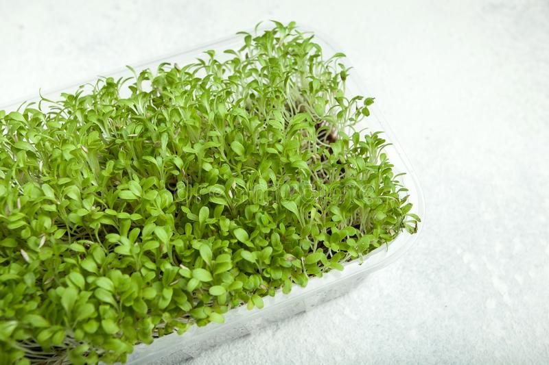 Young micro-green in a plastic container on a white background stock photography