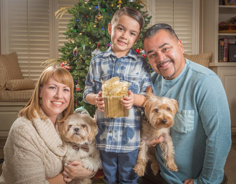 Young Mixed Race Family In Front of Christmas Tree. Happy Young Mixed Race Family and Puppies In Front of Christmas Tree stock image