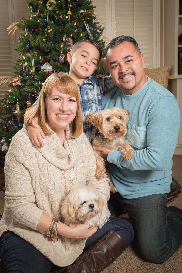 Young Mixed Race Family In Front of Christmas Tree. Happy Young Mixed Race Family and Puppies In Front of Christmas Tree stock photography