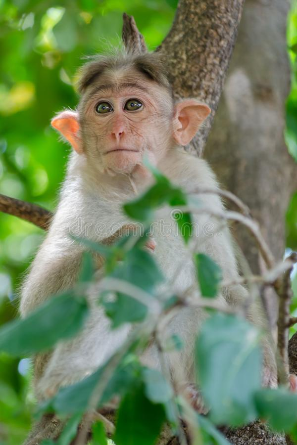 Young monkey in deep thoughts stock photo