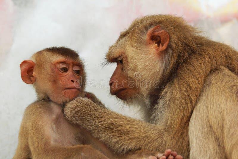 Young monkey stock photos