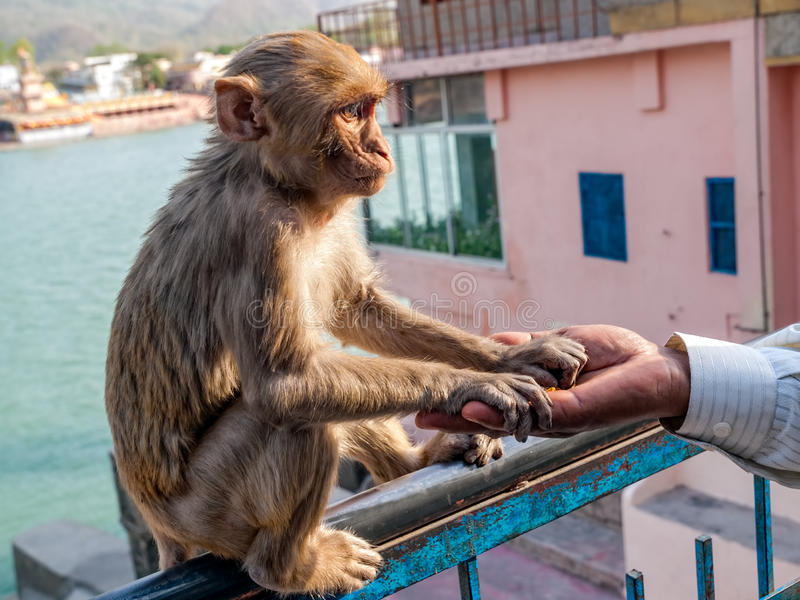 Download Young monkey sitting stock photo. Image of wildlife, travel - 26082762