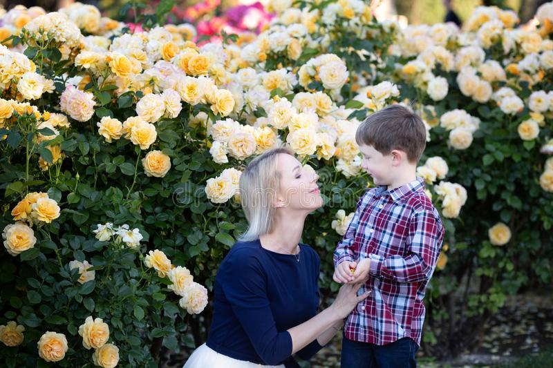 A young mother with little son sitting near yellow roses bush, hugging and laughing stock photos