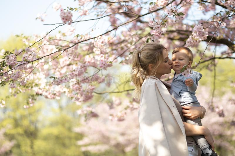 Young mother mom holding her little baby son boy child under blossoming SAKURA Cherry trees with falling pink petals and stock image