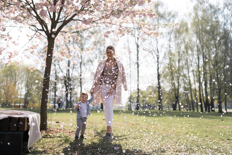 Young mother walking with her baby boy child son in a park under Sakura trees royalty free stock photography