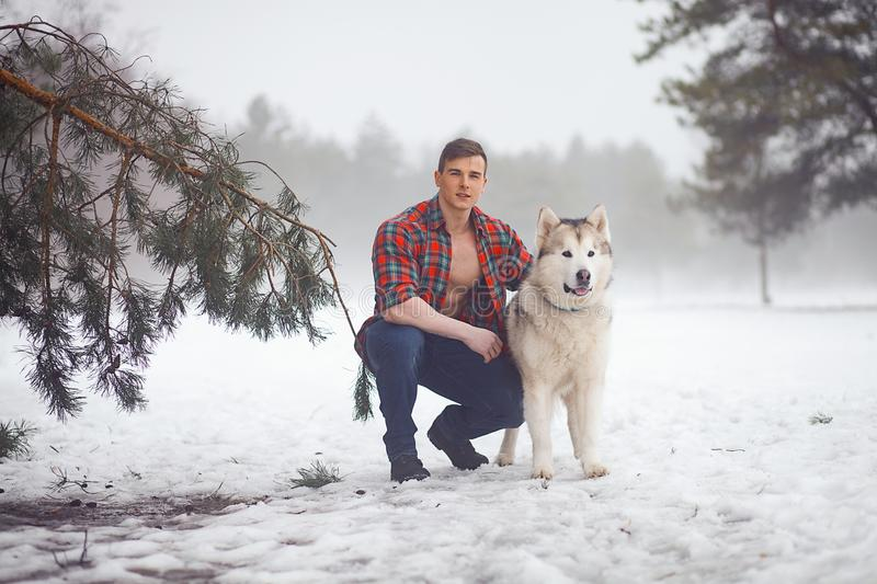 Young muscular man in unbuttoned shirt sits and hugs dog Malamute at walk in winter misty forest. royalty free stock image