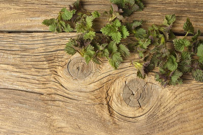 Young nettle leaves on a rustic background stock photo