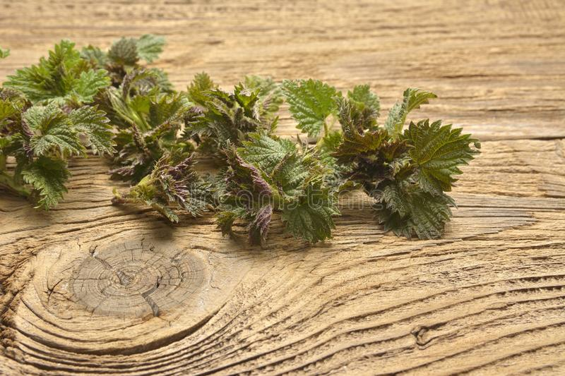 Young nettle leaves on a rustic background stock images