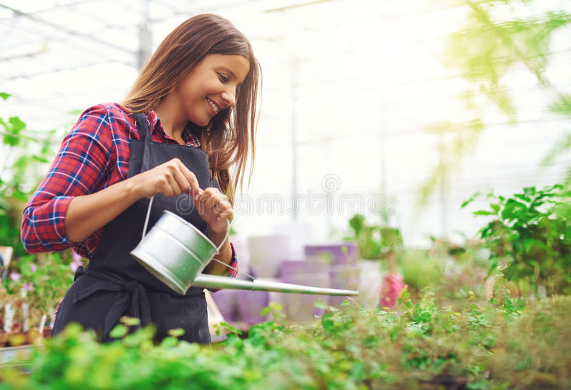 Young nursery owner watering potted plants stock photography
