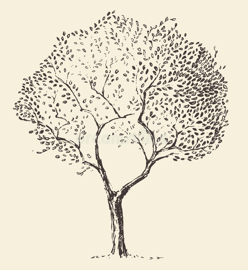 Young olive tree illustration vector hand drawn royalty free illustration