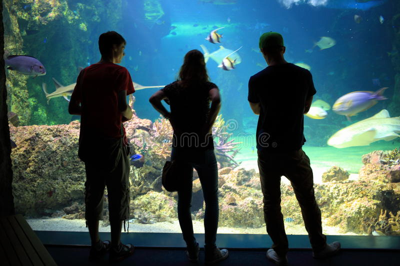 Young people in aquarium silhouettes royalty free stock photo