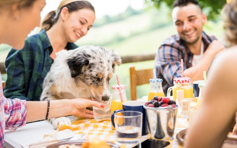 Young people at healthy pic nic breakfast with cute dog in countryside farm house - Happy friends millennials having fun together stock photos