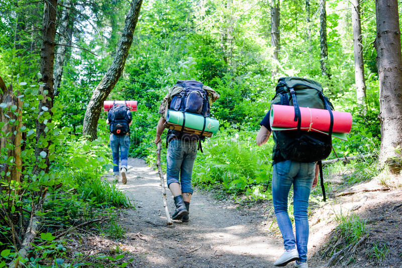 Young people hiking with backpacks in forest royalty free stock images