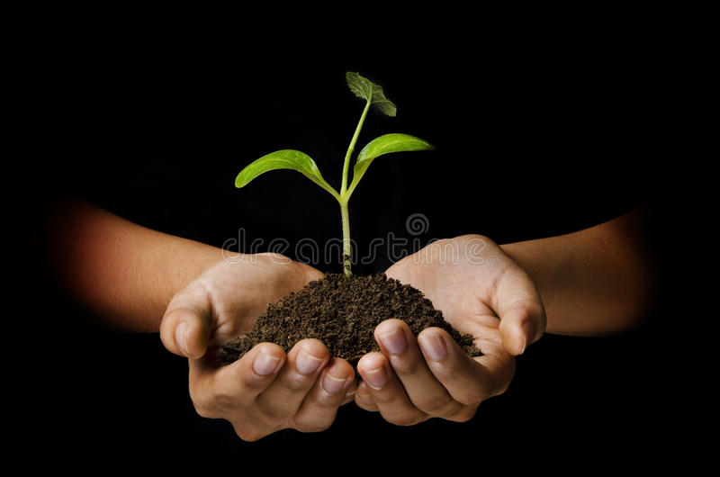 Download Young plant stock photo. Image of black, care, photography - 24452566