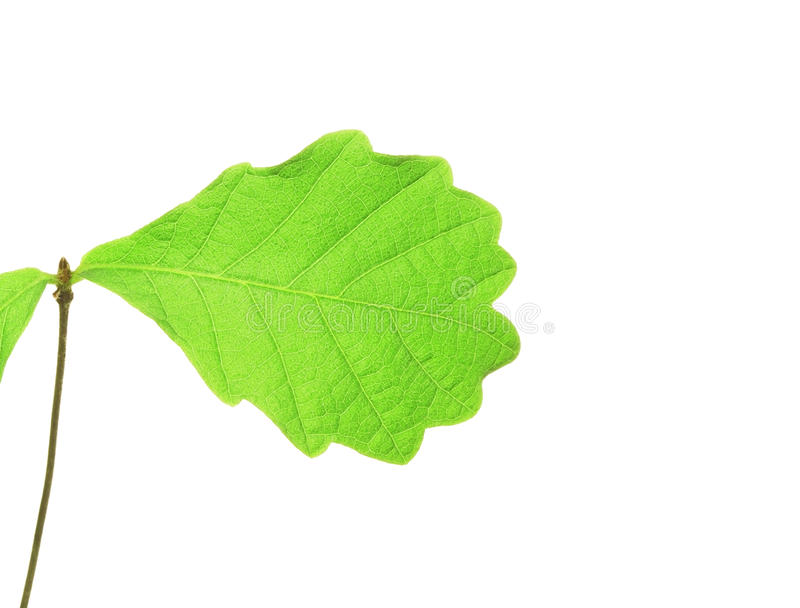 Download Young plant stock image. Image of ecology, large, leaf - 24520799